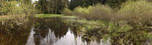 Sevřený horní rybník